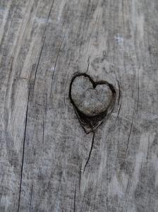 Heart burned on tree