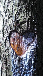 Heart burned deeply into tree
